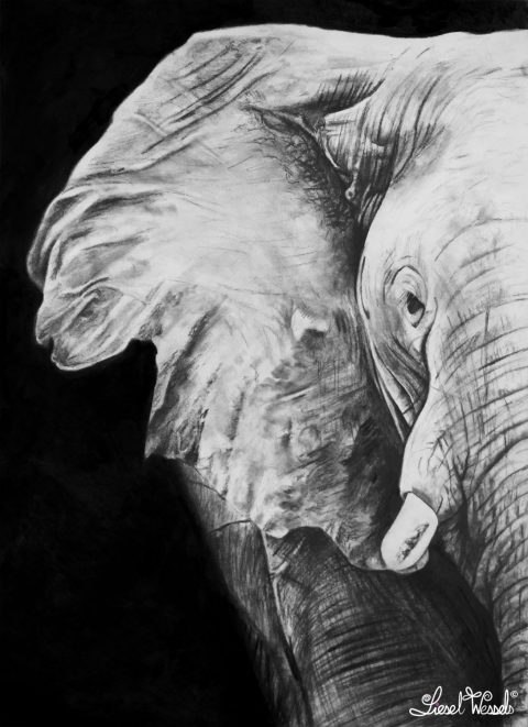 The African Elephant - Drawing Commission Liesel Wessels